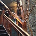 tree in McSwiggan's