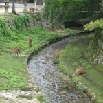 A stream with deer hanging around.