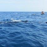 Nota el tamaño del tiburón en relación a la lancha y buzos