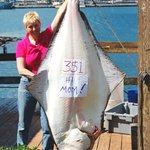 Lodge Record 351 pound halibut