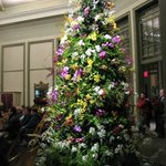 DSBG Holiday Orchid Tree