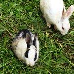 Rabbits at Garden