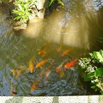 little lake in the garden