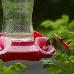 Hummingbirds entertain during breakfast
