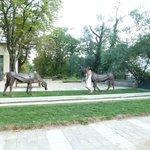 Les chevaux de vals