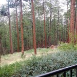 The view of the woods from the rear porch of the hotel.