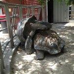 tortugas una de 90 añosy otra de  110 años