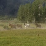 Horses being let out to pasture