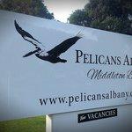 Pelicans Albany Foto
