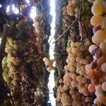Grapes for the Vin Santo