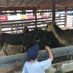 Lamas, donkeys, peacocks and more!