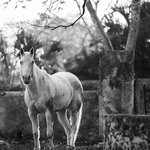 One of the residents at Hacienda Yaxcopoil