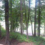View from back Porch - horse pasture and river on the opposite of that patch of trees