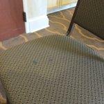 Comfort Suites Myrtle Beach Foto