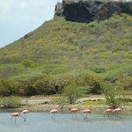 Flamingo Sanctuary Sint Willibrordus