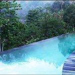 Infinity edge pool overlooking lush jungle