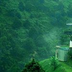 Lush, peaceful, jungle setting