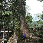 Huge Trees!
