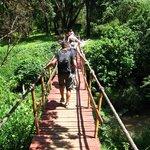 Pont de singes