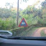 As placas na estrada já dão uma idéia dos animais que você pode encontrar