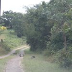 Animais pela estrada