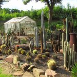 Cactus patch (more impressive here then my home in Texas)