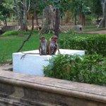 Adorable family of monkeys