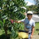 Learning How to Pick Coffee Beans