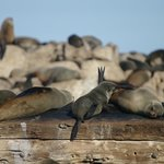 seals resting on wreck