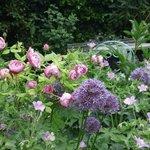 Rosa's Rose Garden