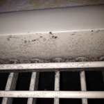 Mold or Mildew?  And the debate rages....