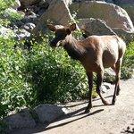 Elk on the path at Bear Lake.