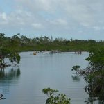 Lucaya National Park mangroves
