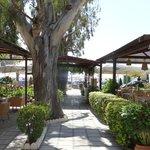 Ibiskos gardens