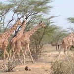 Hells gate walking safaris
