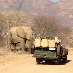On the game drive