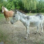 El caballo y el burro!!