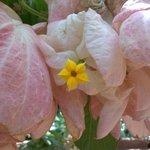 Blossom within a blossom