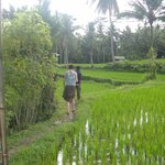 Stunning ricefields just outside the villa