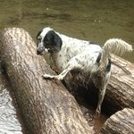 Holly, having a ball in the stream at Rip Van Winkle Campgrounds