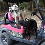 Everybody loves the only pink ad camo golf cart at Rip Van Winkle Campsites