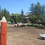 Enclos extérieur pour les vaches