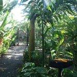 papaya for toucans and macaws