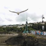 gull bombing verity shoot