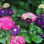 Beautiful flowers in their gardens