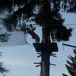 Hornpark - big tree