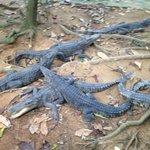 Namuang Safari Park (Koh Samui)