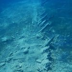 le sorprese sottomarine