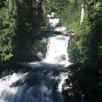 Seen on Narada Falls trail