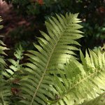Ferns abound
